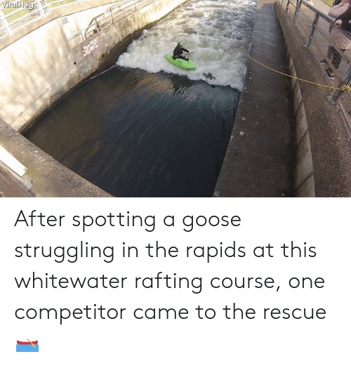 One, Goose, and This: After spotting a goose struggling in the rapids at this whitewater rafting course, one competitor came to the rescue 🛶