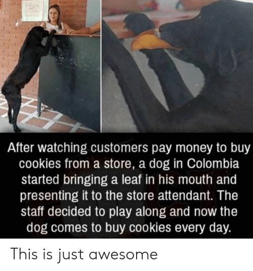 Cookies, Money, and Colombia: After watching customers pay money to buy  cookies from a store, a dog in Colombia  started bringing a leaf in his mouth and  presenting it to the store attendant. The  staff decided to play along and now the  dog comes to buy cookies every day. This is just awesome