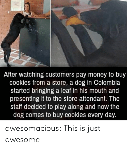 Cookies, Money, and Tumblr: After watching customers pay money to buy  cookies from a store, a dog in Colombia  started bringing a leaf in his mouth and  presenting it to the store attendant. The  staff decided to play along and now the  dog comes to buy cookies every day. awesomacious:  This is just awesome
