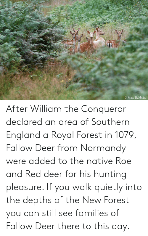 pleasure: After William the Conqueror declared an area of Southern England a Royal Forest in 1079, Fallow Deer from Normandy were added to the native Roe and Red deer for his hunting pleasure. If you walk quietly into the depths of the New Forest you can still see families of Fallow Deer there to this day.