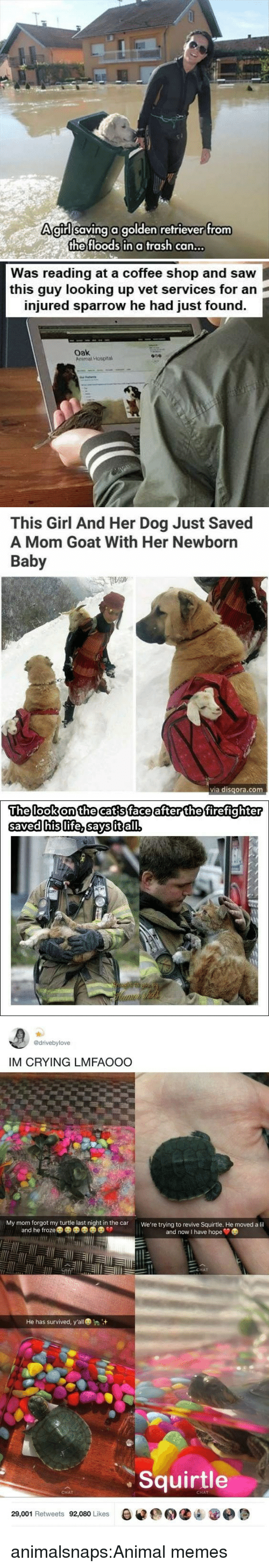 Firefighter: Agirllsaving a golden refriever trom  the floods in a trash can...   Was reading at a coffee shop and saw  this guy looking up vet services for an  injured sparrow he had just found.  oak  Arimal Hospna   This Girl And Her Dog Just Saved  A Mom Goat With Her Newborn  Baby  via disqora.com   The lookonthecatsface after the firefighter  savedhislife.savsitłal   @drivebylove  IM CRYING LMFAOOO  My mom forgot my turtle last night in the car  We're trying to revive Squirtle. He moved a lil  and he froze  and now I have hope  CHAT  He has survived, y'all  Squirtle  CHAT  CHAT  29,001 Retweets 92,080 Likes  0遽@用缱내 @e週 animalsnaps:Animal memes