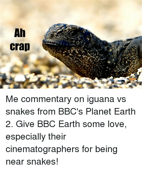 Iguana Vs Snake: Ah  crap Me commentary on iguana vs snakes from BBC's Planet Earth 2. Give BBC Earth some love, especially their cinematographers for being near snakes!