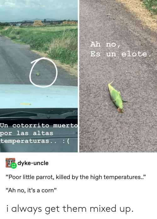 "las: Ah no  Es un elote.  Un cotorrito muert0  por las altas  temperaturas.. :(  Pdyke-uncle  ""Poor little parrot, killed by the high temperatures.  ""Ah no, it's a corn"" i always get them mixed up."