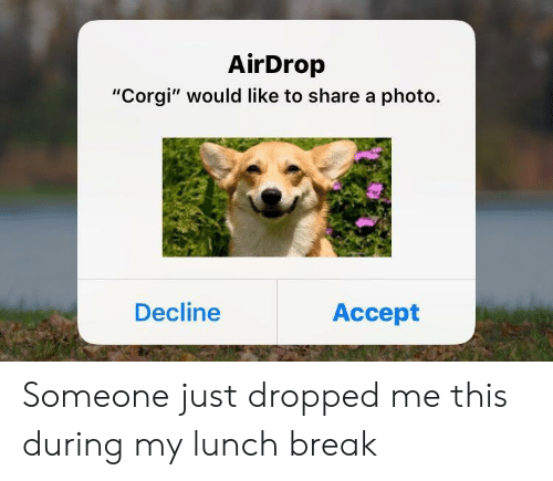 "Corgi, Break, and Photo: AirDrop  ""Corgi"" would like to share a photo.  Decline  Accept Someone just dropped me this during my lunch break"