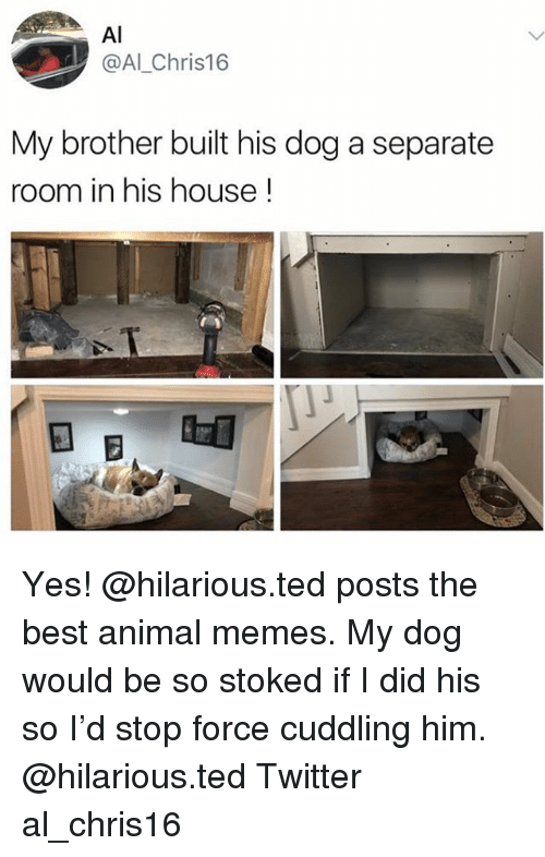 Best Animal Memes: Al  @Al_Chris16  My brother built his dog a separate  room in his house! Yes! @hilarious.ted posts the best animal memes. My dog would be so stoked if I did his so I'd stop force cuddling him. @hilarious.ted Twitter al_chris16