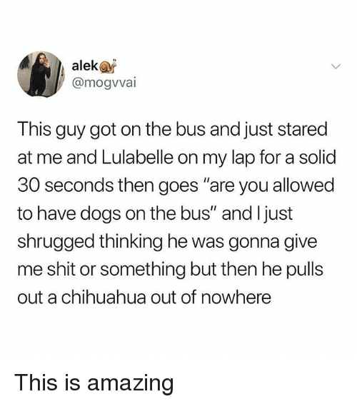 """Chihuahua, Dogs, and Memes: alek@r  @mogvvai  This guy got on the bus and just stared  at me and Lulabelle on my lap for a solid  30 seconds then goes """"are you allowed  to have dogs on the bus"""" and ljust  shrugged thinking he was gonna give  me shit or something but then he pulls  out a chihuahua out of nowhere This is amazing"""