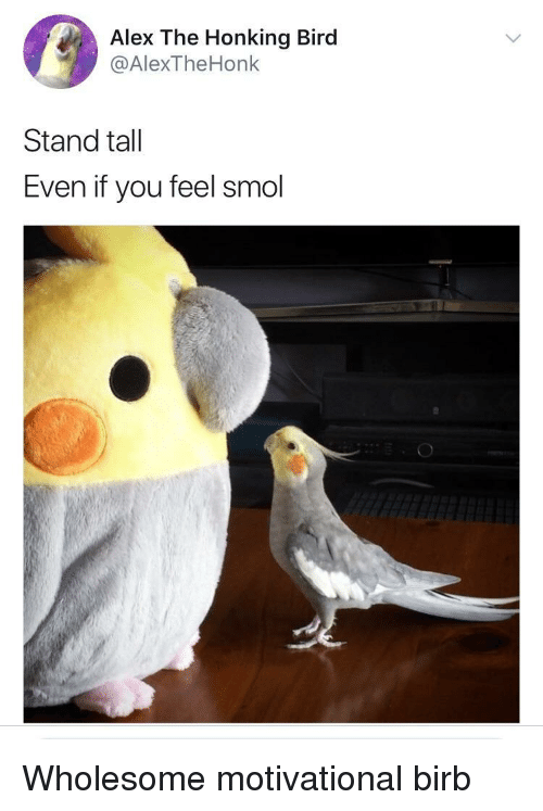 honking: Alex The Honking Bird  @AlexTheHonk  Stand tall  Even if you feel smol <p>Wholesome motivational birb</p>