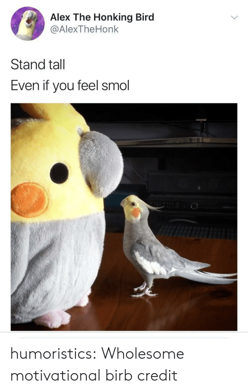 honking: Alex The Honking Bird  @AlexTheHonk  Stand tall  Even if you feel smol humoristics:  Wholesome motivational birb credit