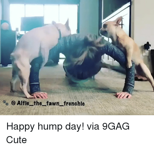 Hump Day: Alfle_ the fawn frenohle Happy hump day!  via 9GAG Cute