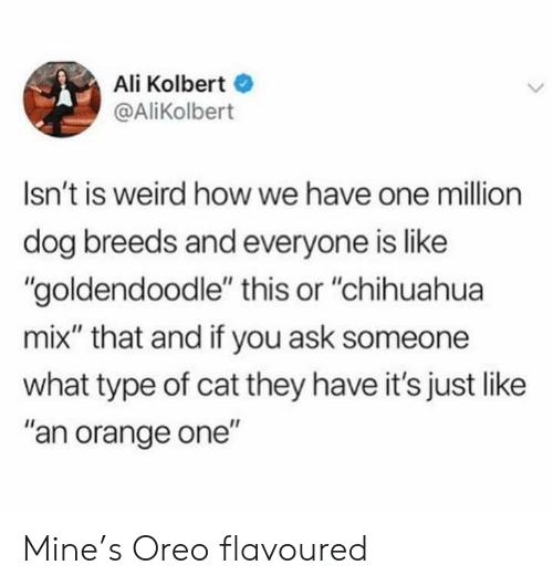 "chihuahua: Ali Kolbert  @AliKolbert  Isn't is weird how we have one million  dog breeds and everyone is like  ""goldendoodle"" this or ""chihuahua  mix"" that and if you ask someone  what type of cat they have it's just like  ""an orange one"" Mine's Oreo flavoured"