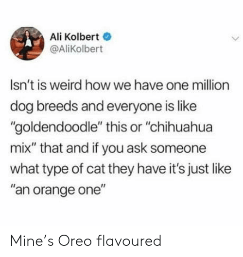 "Ali, Chihuahua, and Weird: Ali Kolbert  @AliKolbert  Isn't is weird howwe have one million  dog breeds and everyone is like  ""goldendoodle"" this or ""chihuahua  mix"" that and if you ask someone  what type of cat they have it's just like  ""an orange one"" Mine's Oreo flavoured"