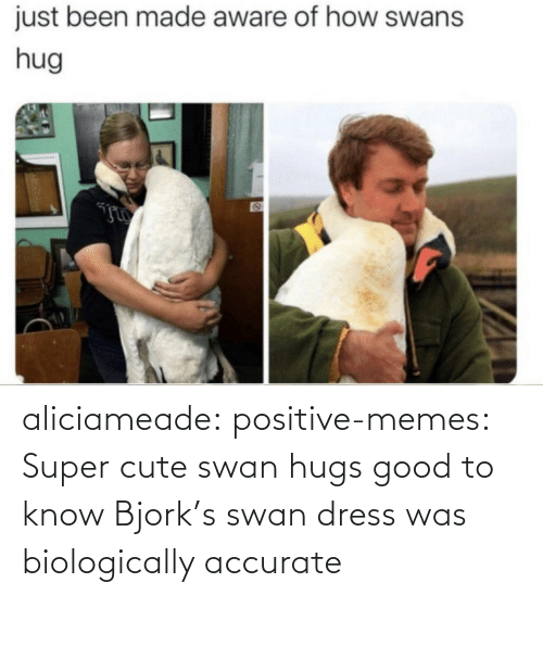 Positive Memes Tumblr: aliciameade: positive-memes: Super cute swan hugs good to know Bjork's swan dress was biologically accurate