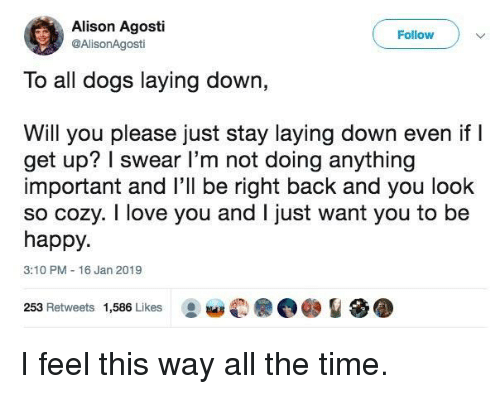 Dogs, Love, and I Love You: Alison Agosti  @AlisonAgosti  Follow  To all dogs laying down,  Will you please just stay laying down even if l  get up? I swear l'm not doing anything  important and l'll be right back and you look  so cozy. I love you and I just want you to be  happy.  3:10 PM 16 Jan 2019  253 Retweets 1,586 Likes I feel this way all the time.