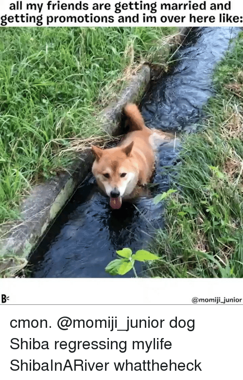 promotions: all my friends are getting married and  getting promotions and im over here like:  B-  momiji junior cmon. @momiji_junior dog Shiba regressing mylife ShibaInARiver whattheheck