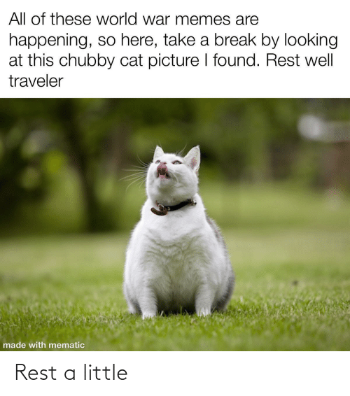 traveler: All of these world war memes are  happening, so here, take a break by looking  at this chubby cat picture I found. Rest well  traveler  made with mematic Rest a little