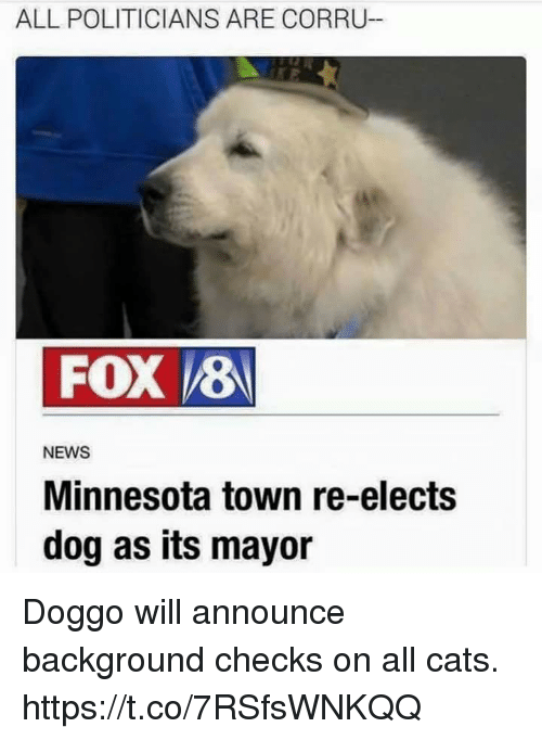 Cats, Funny, and News: ALL POLITICIANS ARE CORRU-  FOX 8  NEWS  Minnesota town re-elects  dog as its mayor Doggo will announce background checks on all cats. https://t.co/7RSfsWNKQQ