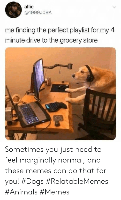 Animals, Dogs, and Memes: allie  @1999JOBA  me finding the perfect playlist for my 4  minute drive to the grocery store Sometimes you just need to feel marginally normal, and these memes can do that for you! #Dogs #RelatableMemes #Animals #Memes