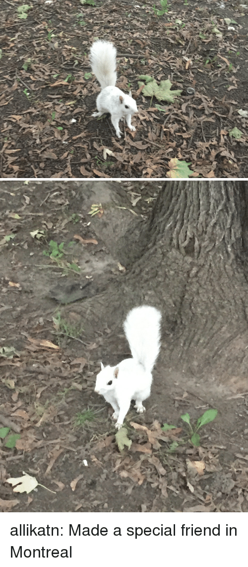 Target, Tumblr, and Blog: allikatn:  Made a special friend in Montreal
