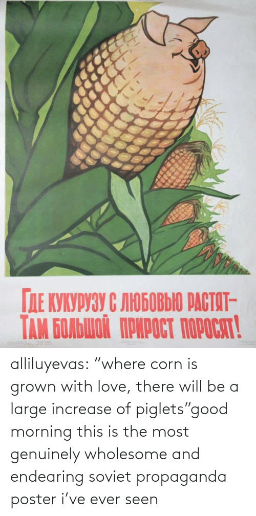 "ever: alliluyevas:  ""where corn is grown with love, there will be a large increase of piglets""good morning this is the most genuinely wholesome and endearing soviet propaganda poster i've ever seen"