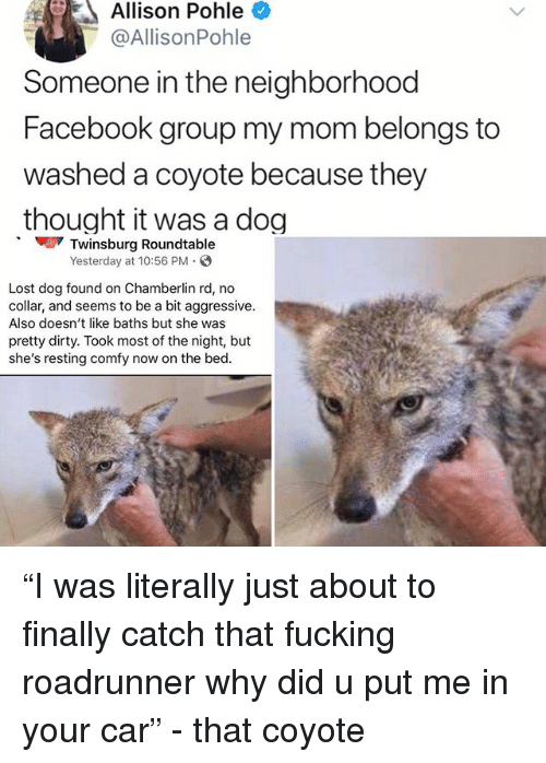 """Facebook, Fucking, and Memes: Allison Pohle  @AllisonPohle  Someone in the neighborhood  Facebook group my mom belongs to  washed a coyote because they  thought it was a dog  Twinsburg Roundtable  Yesterday at 10:56 PM  Lost dog found on Chamberlin rd, no  collar, and seems to be a bit aggressive.  Also doesn't like baths but she was  pretty dirty. Took most of the night, but  she's resting comfy now on the bed. """"I was literally just about to finally catch that fucking roadrunner why did u put me in your car"""" - that coyote"""