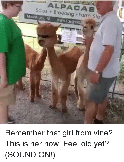 Eas: ALPACAS  Sales Breeding Farm Sto  Mount Joy, PA www.Eas Remember that girl from vine? This is her now. Feel old yet? (SOUND ON!)