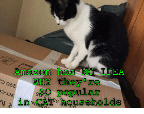Amazer: Amaz on has NO I DEA  -LNO  WHY they re  popular  in CAT households