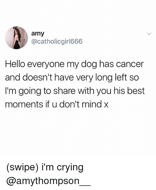 Crying, Hello, and Best: amy  @catholicgirl666  Hello everyone my dog has cancer  and doesn't have very long left so  I'm going to share with you his best  moments if u don't mind x (swipe) i'm crying @amythompson__