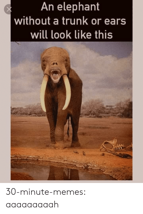 trunk: An elephant  without a trunk or ears  will look like this 30-minute-memes:  aaaaaaaaah