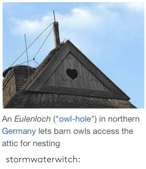 """nesting: An Eulenloch (owl-hole"""") in northern  Germany lets barn owls access the  attic for nesting stormwaterwitch:"""