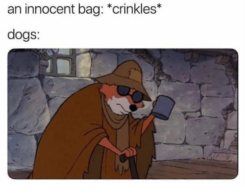 Dogs, Dank Memes, and Innocent: an innocent bag: *crinkles*  dogs: