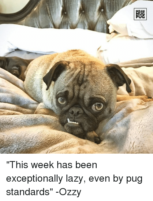 """Ozzies: AN  NGG """"This week has been exceptionally lazy, even by pug standards"""" -Ozzy"""