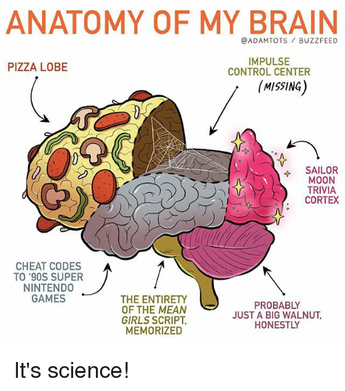 Centere: ANATOMY OF MY BRAIN  @ADAMTOTS BUZZFEED  IMPULSE  CONTROL CENTER  PIZZA LOBE  MISSING)  SAILOR  MOON  TRIVIA  CORTEX  CHEAT CODES  TO '90S SUPER  NINTEND0  GAMES  THE ENTIRETY  OF THE MEAN  GIRLS SCRIPT  MEMORIZED  PROBABLY  JUST A BIG WALNUT  HONESTLY It's science!