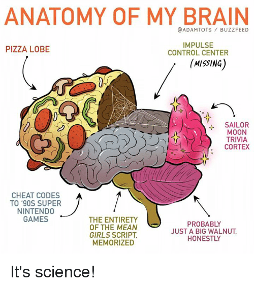 Centere: ANATOMY OF MY BRAIN  @ADAMTOTS BUZZFEED  PIZZA LOBE  IMPULSE  CONTROL CENTER  (MISSING  4 SAILOR  MOON  TRIVIA  CORTEX  CHEAT CODES  TO '90S SUPER  NINTENDO  GAMES  THE ENTIRETY  OF THE MEAN  GIRLS SCRIPT,  MEMORIZED  PROBABLY  JUST A BIG WALNUT  HONESTLY It's science!