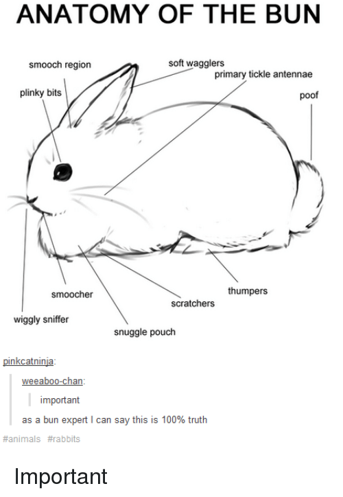 Poofes: ANATOMY OF THE BUN  soft wagglers  smooch region  primary tickle antennae  plinky bits  poof  thumpers  smoocher  scratchers  wiggly sniffer  snuggle pouch  pinkcatninja  eeaboo-chan  important  as a bun expert l can say this is 100% truth  animals Important