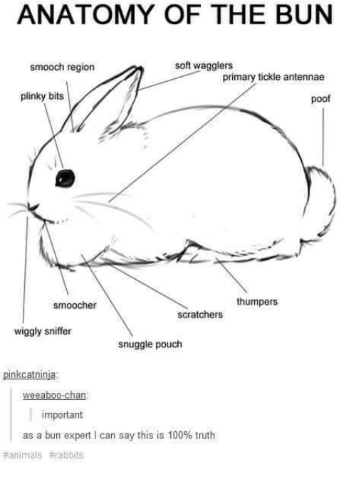 Poofes: ANATOMY OF THE BUN  soft wagglers  smooch region  primary tickle antennae  plinky bits  poof  thumpers  smoocher  scratchers  wiggly sniffer  snuggle pouch  nkcatniniai  weeaboo-chan  mportant  as a bun expert l can say this is 100% truth  animals arabbits