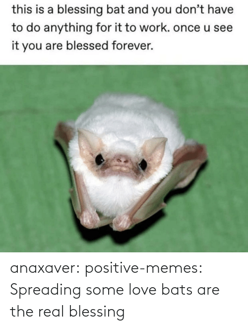 spreading: anaxaver: positive-memes: Spreading some love bats are the real blessing
