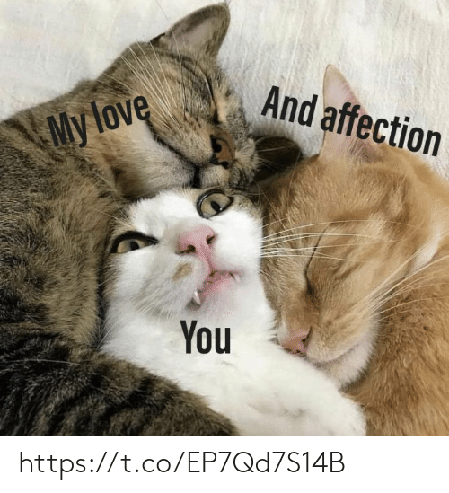 Love, Memes, and 🤖: And affection  My love  You https://t.co/EP7Qd7S14B