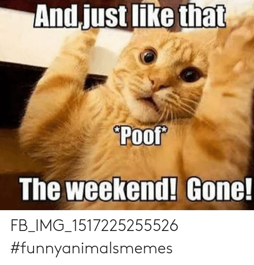 Weekend Gone: And.just like that  Poof  The weekend! Gone! FB_IMG_1517225255526 #funnyanimalsmemes