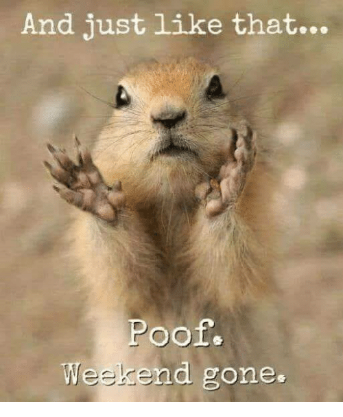 Weekend Gone: And just like that...  Poof.  Weekend gone.