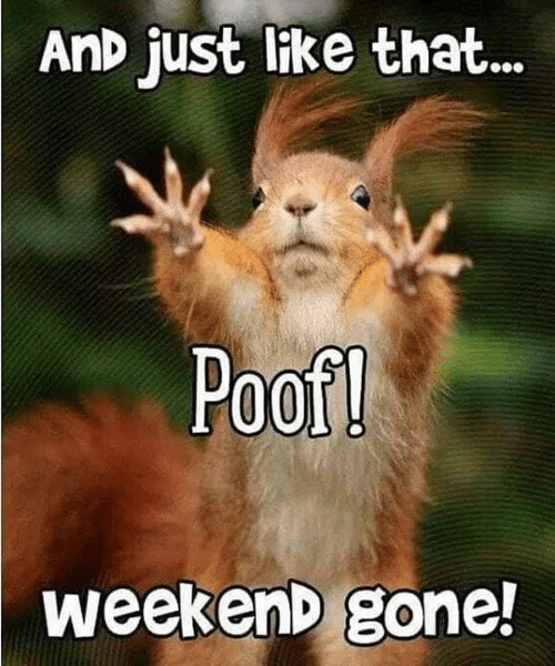 Memes, 🤖, and Weekend: AnD juSt like that...  Poof  WeekenD gone