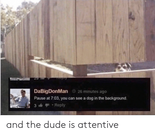 attentive: and the dude is attentive