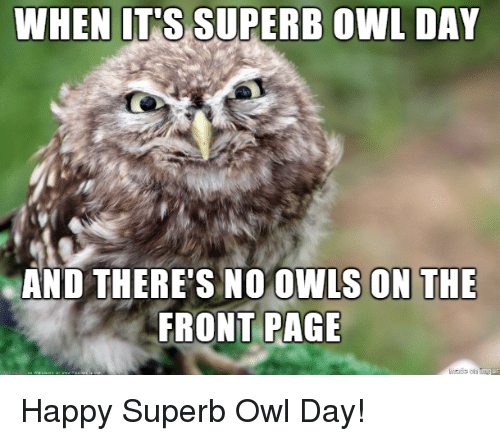 Superb: AND THERE'S NO OWLS ON THE  FRONT PAGE Happy Superb Owl Day!