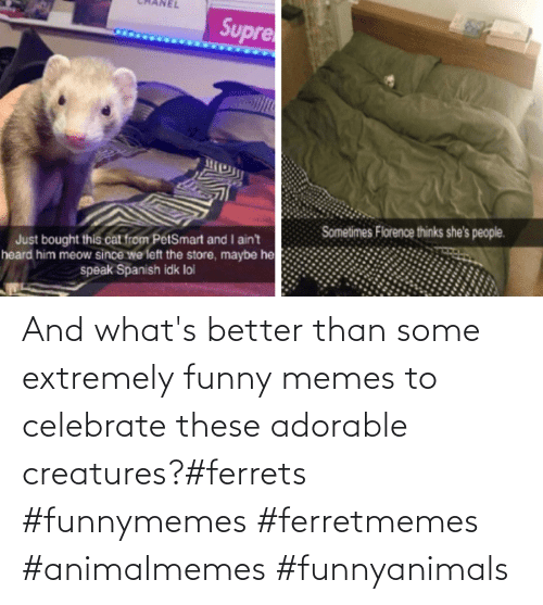 whats: And what's better than some extremely funny memes to celebrate these adorable creatures?#ferrets #funnymemes #ferretmemes #animalmemes #funnyanimals
