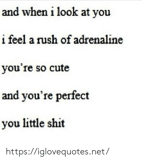 Cute, Shit, and Rush: and when i look at you  i feel a rush of adrenaline  you're so cute  and you're perfect  you little shit https://iglovequotes.net/