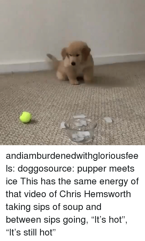 "Chris Hemsworth, Energy, and Tumblr: andiamburdenedwithgloriousfeels:  doggosource: pupper meets ice This has the same energy of that video of Chris Hemsworth taking sips of soup and between sips going, ""It's hot"", ""It's still hot"""