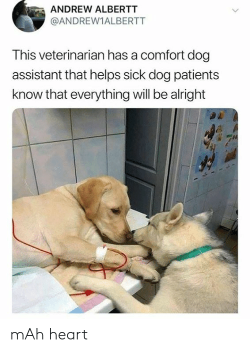 Dank, Heart, and Veterinarian: ANDREW ALBERTT  @ANDREW1ALBERTT  This veterinarian has a comfort dog  assistant that helps sick dog patients  know that everything will be alright mAh heart