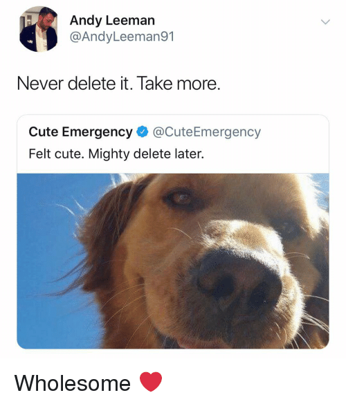 Delete It: Andy Leeman  @AndyLeeman91  Never delete it. Take more  Cute Emergency @CuteEmergency  Felt cute. Mighty delete later. Wholesome ❤️