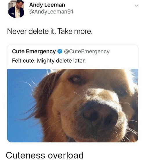 Delete It: Andy Leeman  @AndyLeeman91  Never delete it. Take more.  Cute Emergency @CuteEmergency  Felt cute. Mighty delete later. Cuteness overload