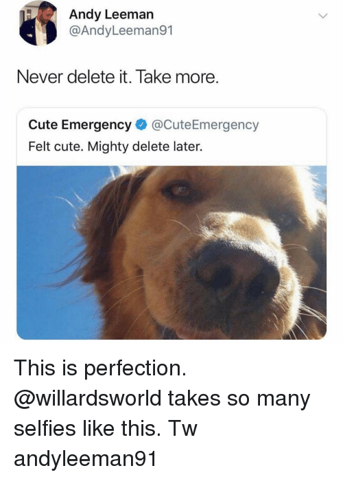 Delete It: Andy Leeman  @AndyLeeman91  Never delete it. Take more  Cute Emergency@CuteEmergency  Felt cute. Mighty delete later. This is perfection. @willardsworld takes so many selfies like this. Tw andyleeman91