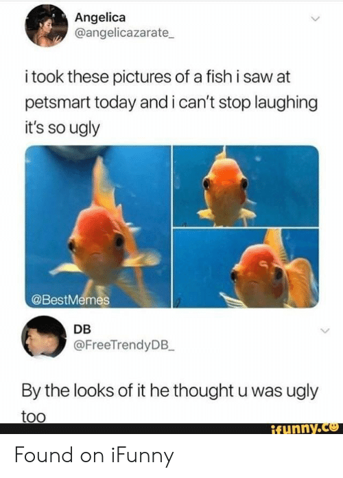 cant stop laughing: Angelica  @angelicazarate  i took these pictures of a fish i saw at  petsmart today and i can't stop laughing  it's so ugly  @BestMemes  DB  @FreeTrendyDB_  By the looks of it he thought u was ugly  too  ifynny.co Found on iFunny
